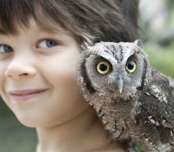 Child with owl